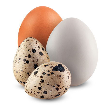 Huhn und Wachteleier auf weißem Hintergrund.