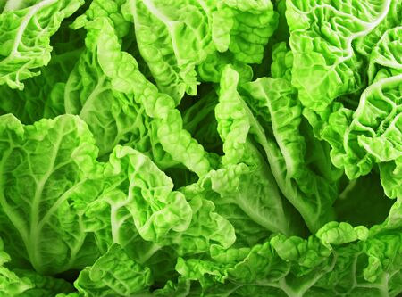 Fresh lettuce leaves, close up. Stock Photo