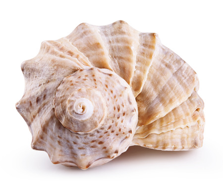 Sea shell isolated on a white background. Clipping Path Banco de Imagens