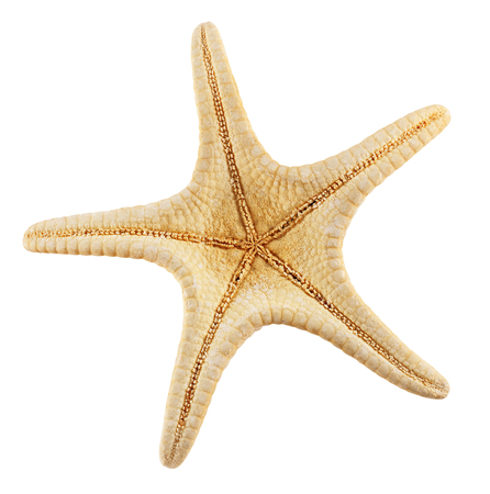 seastar: Starfish isolated on white background. Clipping Path