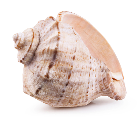 Sea shell isolated on a white background. Clipping Path 版權商用圖片