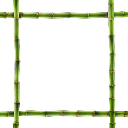 fengshui: Fresh bamboo isolated on white background.