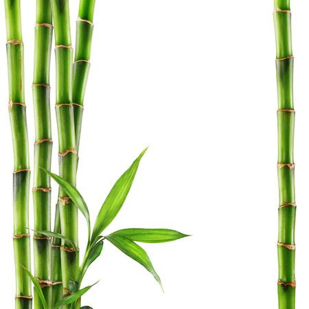 Bamboe op een witte achtergrond. Knippen Weg Stockfoto