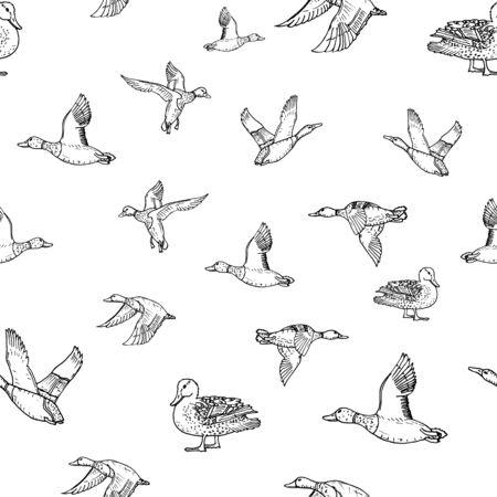Mallard duck vector sketch wild bird icon. Seamless pattern 向量圖像