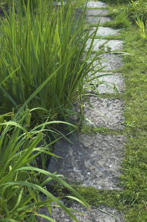 Stone path from tiles in a grass photo