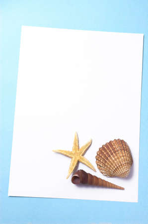 cockleshells: White leaf of a paper with cockleshells