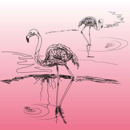 feathering: two species of flamingos in the style of hand drawn on the pink background Illustration