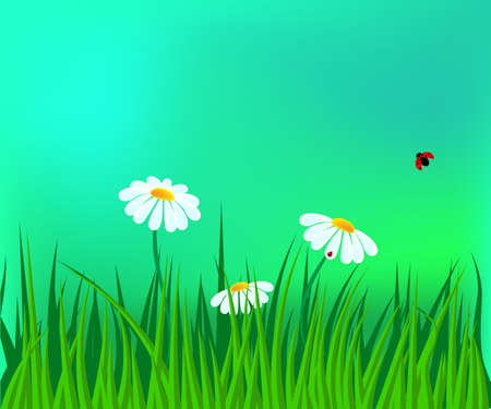 field of daisies: field of white daisies two ladybugs Illustration