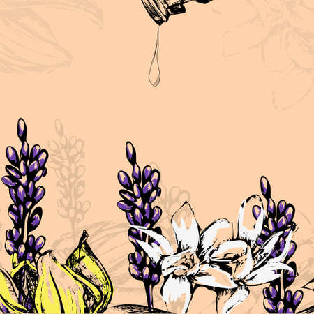 masseuse: vector illustration flowers for essential oil - lavender, ylang ylang, vanilla Illustration