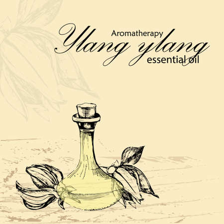 masseuse: vector illustration of essential oil of ylang ylang in the style of hand drawn