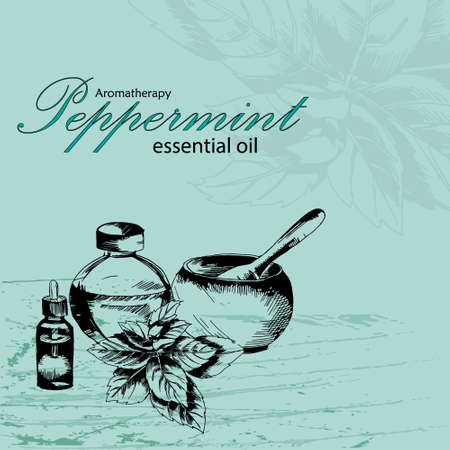peppermint: illustration of essential oil of peppermint in the style of hand drawn
