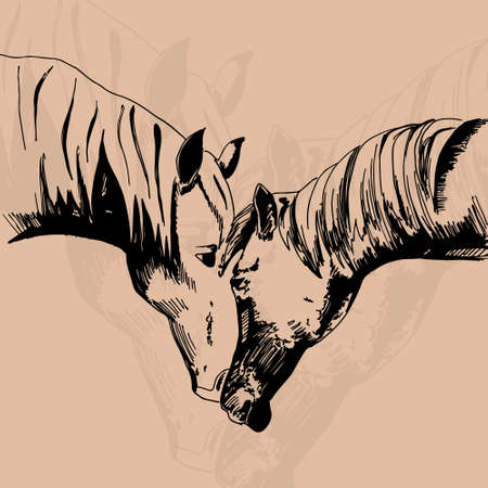 horse care: vector illustration of two horse on the deige background in the style of hand drawn Illustration