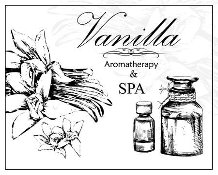 essential: vector illustration of essential oil of vanilla in the style of hand drawn