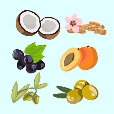six isolated ingredients for natural oils vector illustration