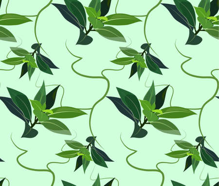 tea tree: seamless pattern of tea tree essential oil  the concept of cosmetology