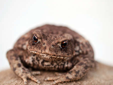little brown toad relaxing after hard day