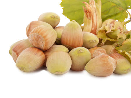 successfully harvest - fresh hazelnuts isolated on white background