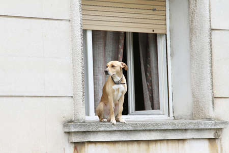 dog on house window have situation under control