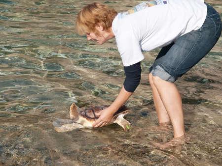 PULA, CROATIA - NOVEMBER 14, 2014: Unidentified member of Marine Turtle Rescue Center release sea turtle on Verudela beach, Pula, Croatia on November 14, 2014. Sea turtles succesfuly recover in Turtle Rescue Center in Pula, Croatia. Editorial