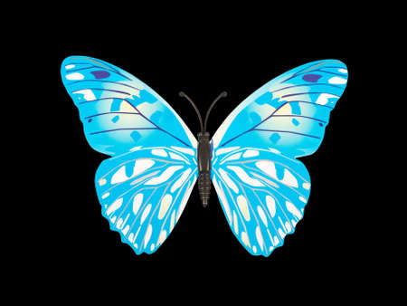 descriptive colours: butterfly wall sticker isolated on black background