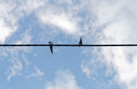 a pair of swallows on electric power line Lizenzfreie Bilder