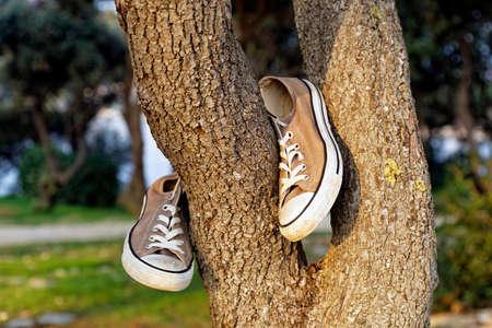 old canvas sport shoes, hanging on tree Standard-Bild