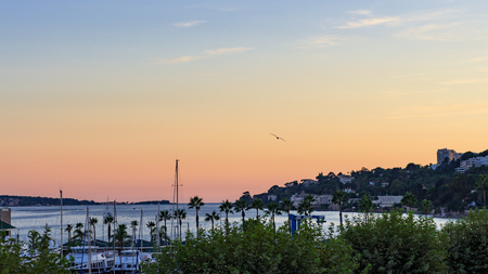 Panoramic sunset with a seagull flying over the small harbor of Golfe Juan, Cote dAzur Imagens