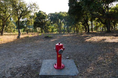 Fire hydrant in forest fire hazard area
