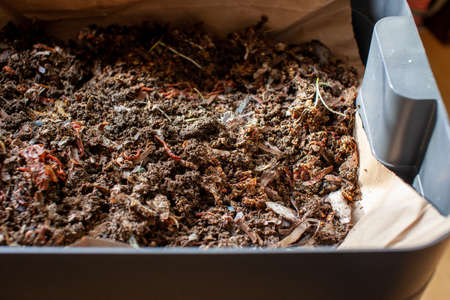 A close up view of worms put into a new feeding tray with fresh bedding material in an indoor vermicomposter. Worm composter are a perfect solution in an apartment to process food waste