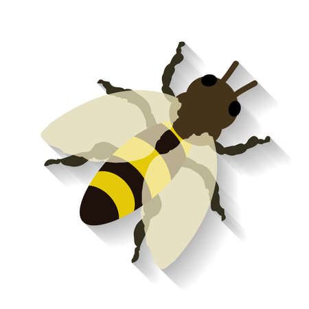 bumble bee: Realistic honey bee isolated on white background. Vector illustration EPS 10