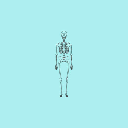 ribcage: Skeletons - human bones. Simple outline flat vector icon isolated on blue background