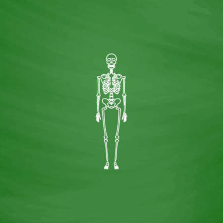 didactic: Skeleton Outline vector icon. Imitation draw with white chalk on green chalkboard. Flat Pictogram and School board background. Illustration symbol Illustration