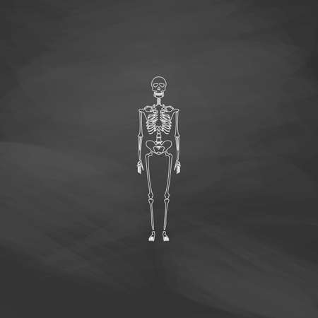 didactic: Skeleton Simple line vector button. Imitation draw with white chalk on blackboard. Flat Pictogram and School board background. Outine illustration icon Illustration