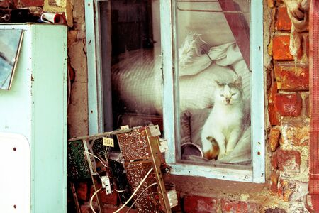 Cat sitting by the window of abandoned house photo