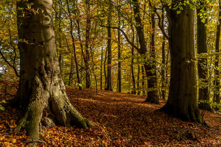 Autumn forest 版權商用圖片