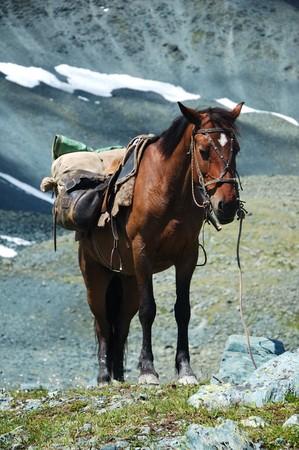 in the mountainous region photo