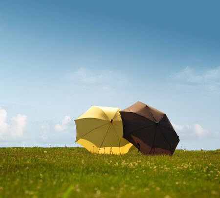 A picture of yellow and black umbrella on a meadow