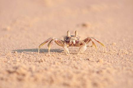Shot close-up krab op het zand