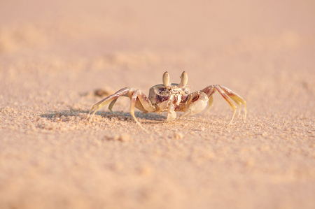 Shot close-up crab on the sand