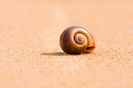 Sandy snail at sunset