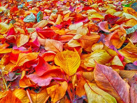 Hojas de otoño bajo el árbol, el río Suyeong, Busan, Corea del Sur, Asia Foto de archivo