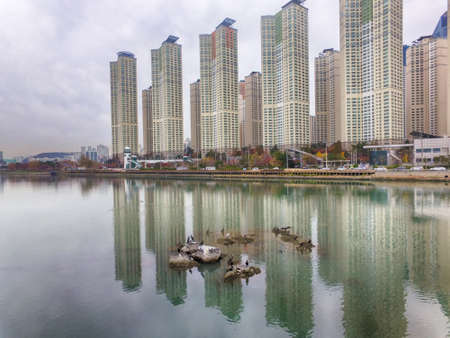 Birds Live in Suyeong River, Busan, South Korea, Asia Stock Photo