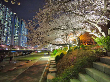 Night view of spring oncheoncheon stream, Busan, South Korea, Asia. Фото со стока