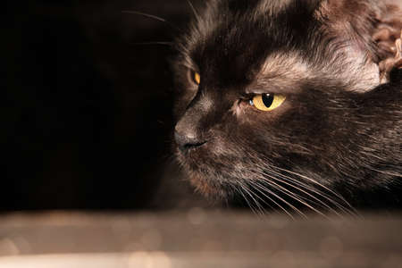 Black sad cat lying on a glass table. Real home photo. Imagens