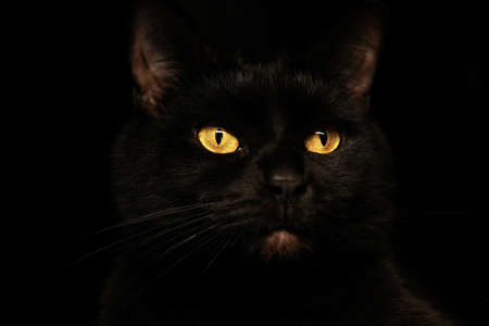 Black cat creepy sinister face portrait on black background.