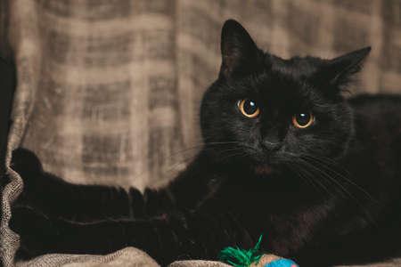Cute Black Kitten with Yellow Eyes Relaxing on Linen Blanket art Stok Fotoğraf