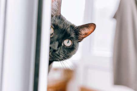 Black cat peeps through the window. Art.