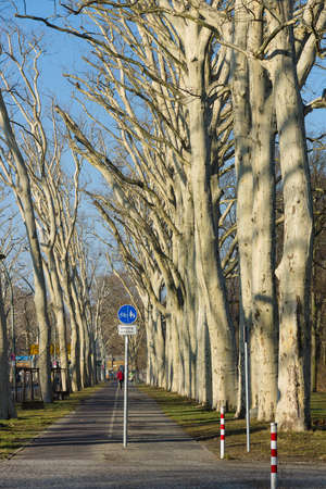 treptow: February  Alley in the park Treptow - Koepenick  Berlin  Germany  Stock Photo