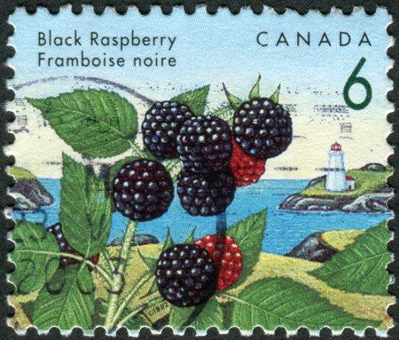 canada stamp: CANADA - CIRCA 1992: Postage stamp printed in Canada, shows Black raspberry, circa 1992 Editorial
