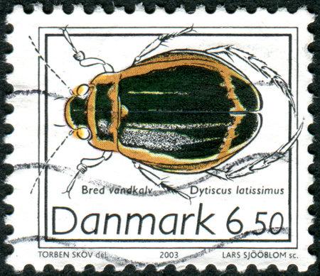latissimus: DANIMARCA - CIRCA 2003: Francobollo stampato in Danimarca, mostra scarabeo Dytiscus latissimus, circa 2003